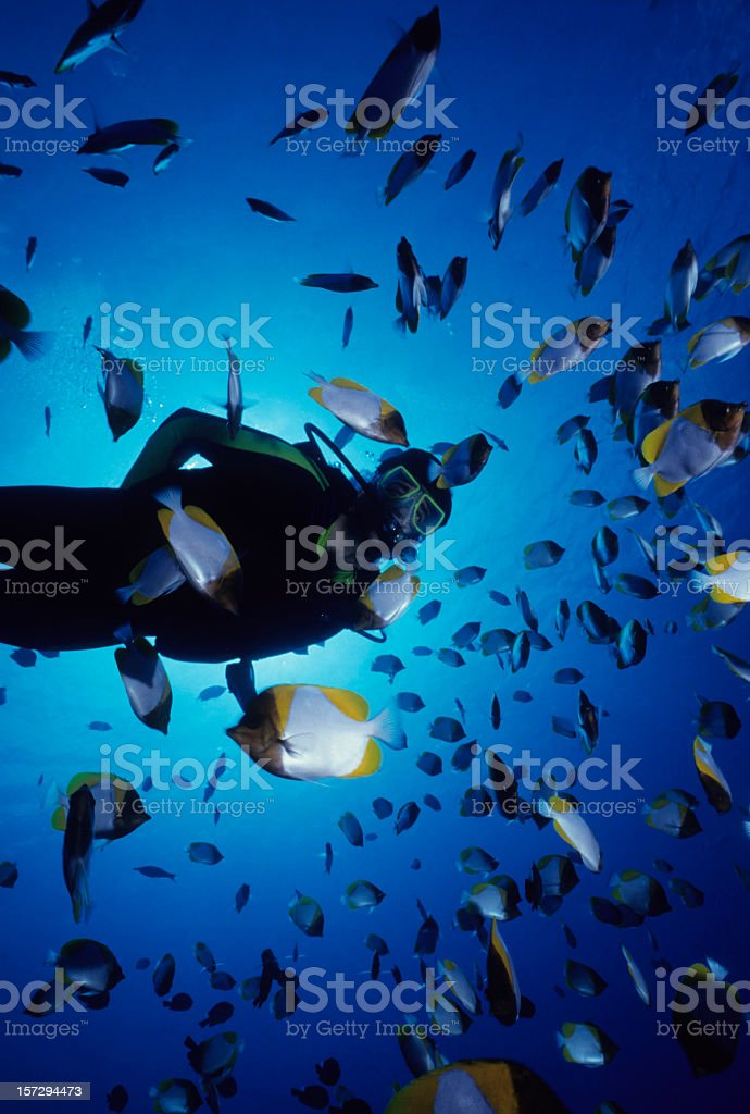 Scuba diver swimming with dozens of fish royalty-free stock photo