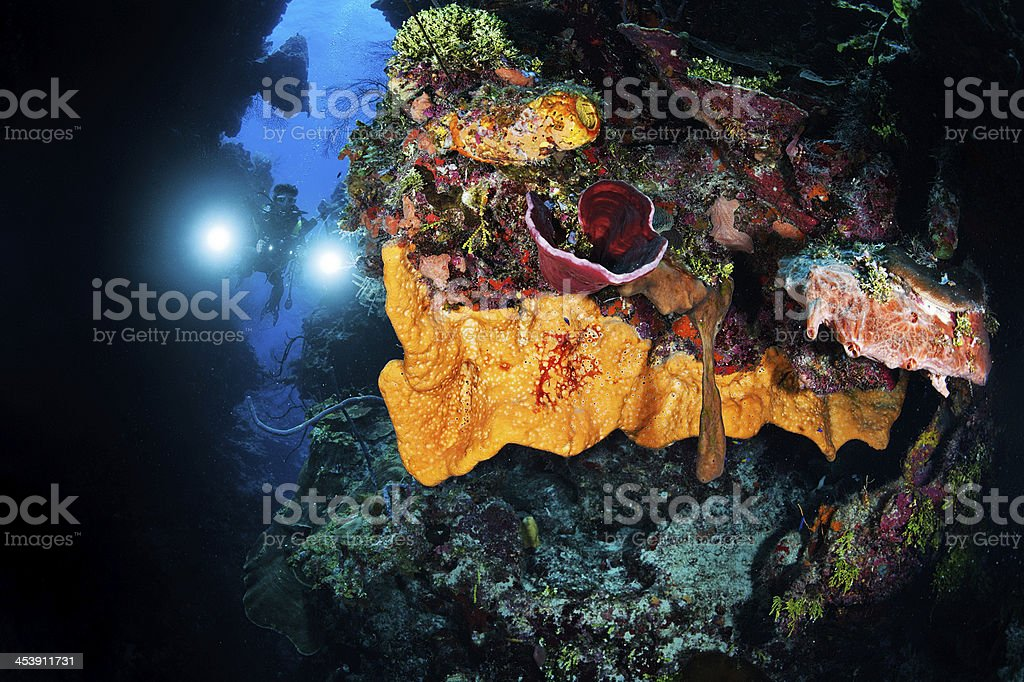 Scuba diver with camera stock photo