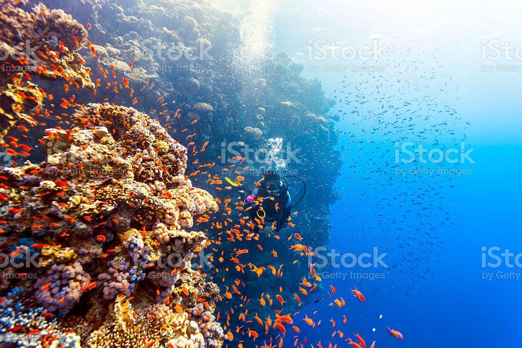 Scuba Diver Woman swims along the reef Scuba Diver Woman swims along the reef, looking at the camera. Adult Stock Photo