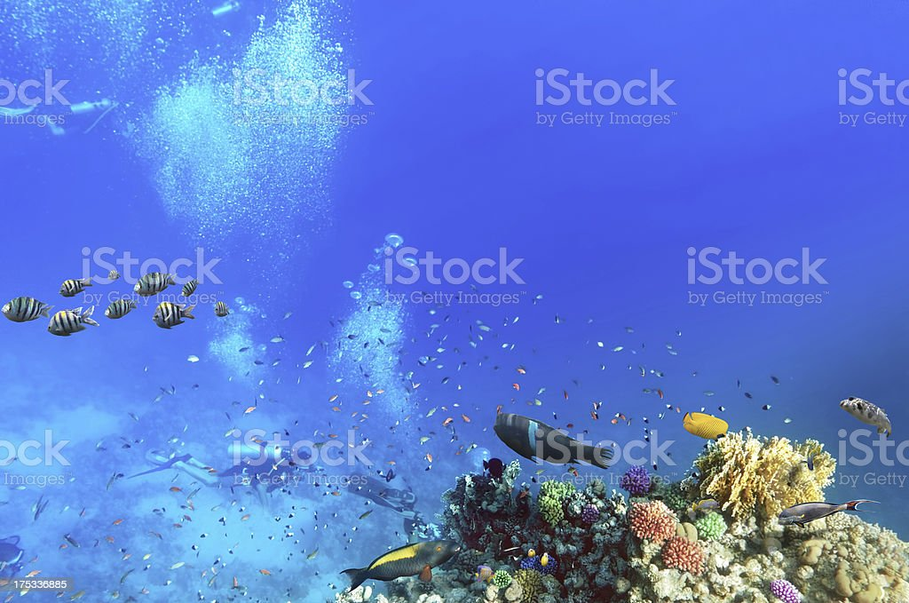 Scuba divers, coral and fish in the Red Sea.Egypt royalty-free stock photo