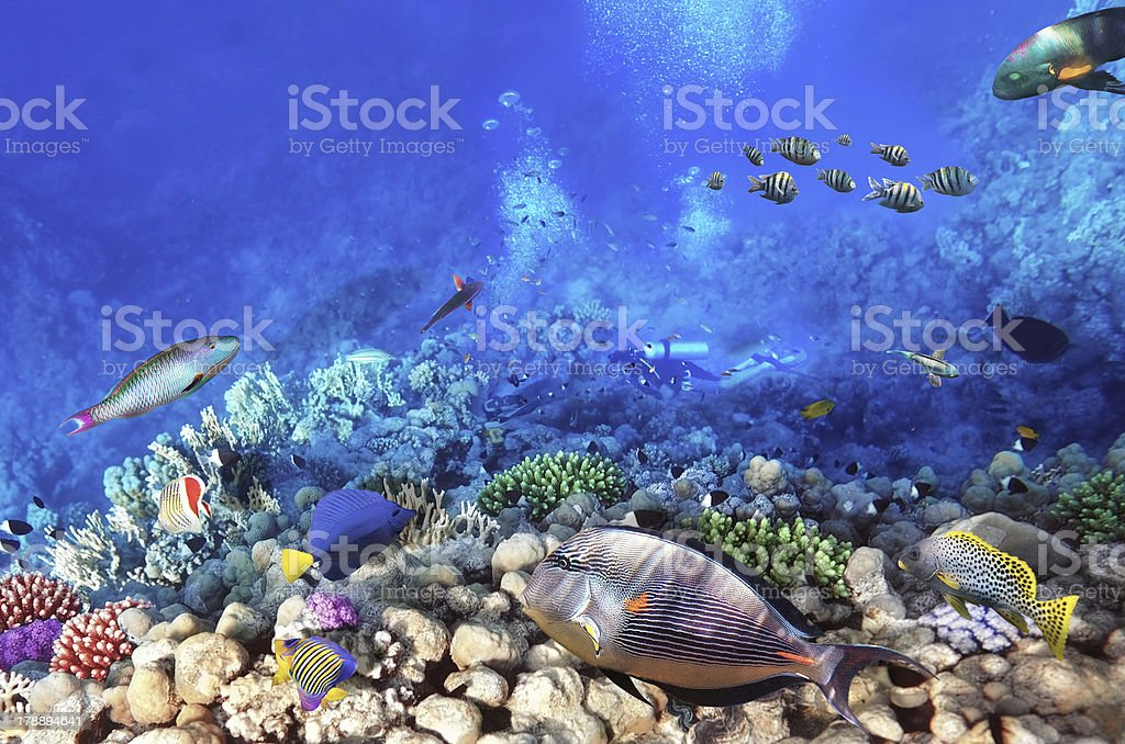 Scuba divers, coral and fish in the Red Sea.Egypt stock photo