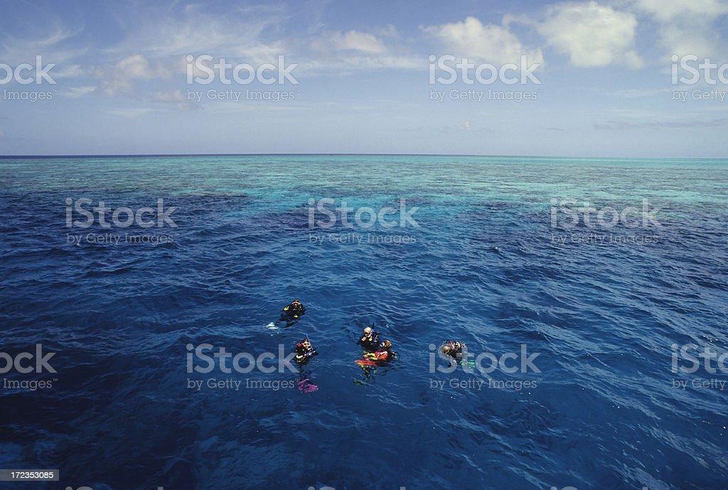 Buceo para buzos flotando en superficie foto de stock libre de derechos