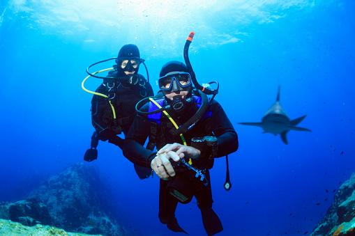 Shark reef. Scuba Diver. Underwater scene with diver in blue.