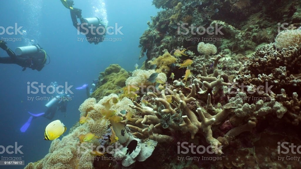 Scuba Divers underwater royalty-free stock photo