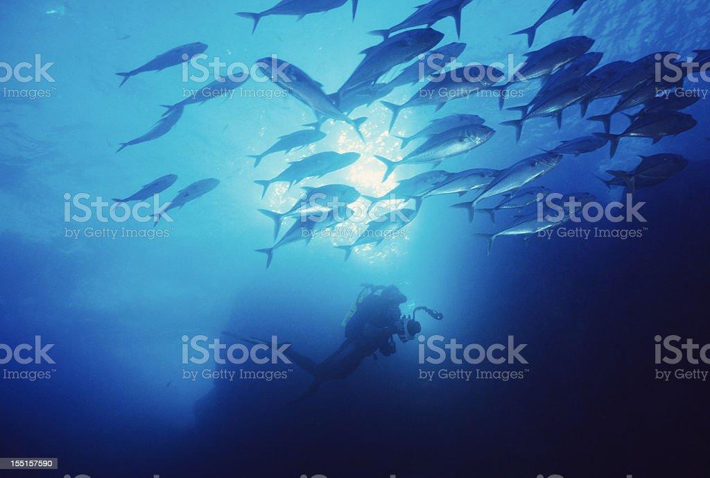 Scuba Diving Adventure stock photo
