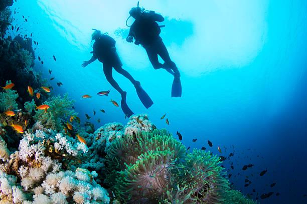La plongée sous-marine dans le récif de corail - Photo