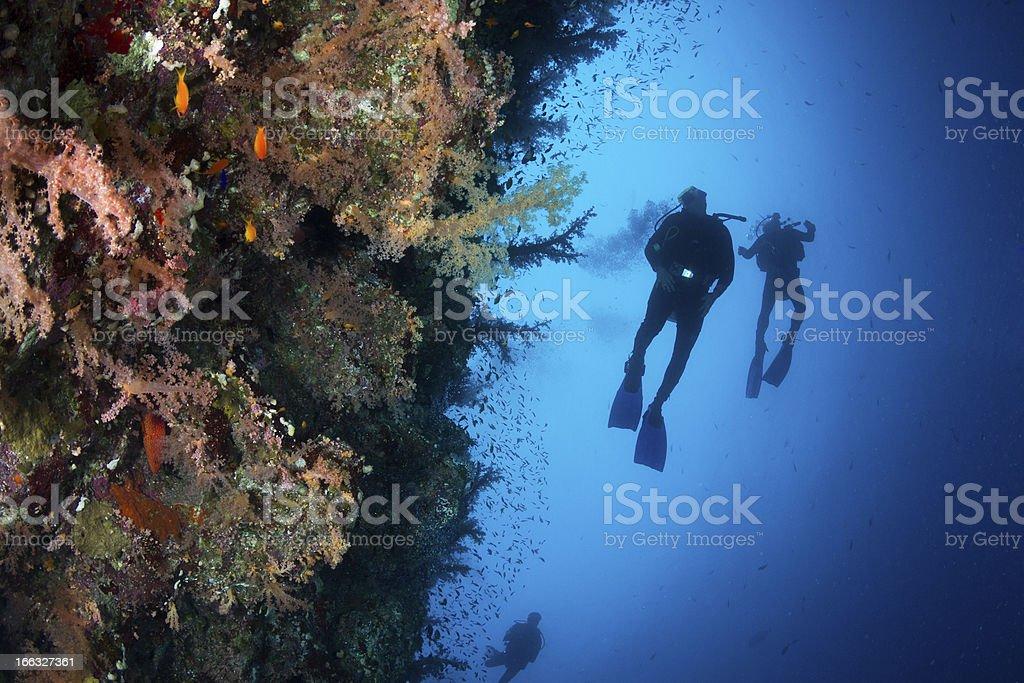 Scuba Diving at Shark & Yolanda Reef royalty-free stock photo