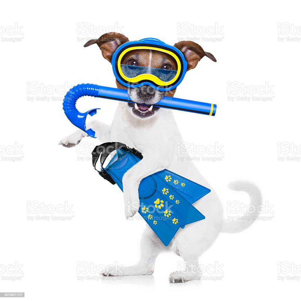 scuba diving dog stock photo