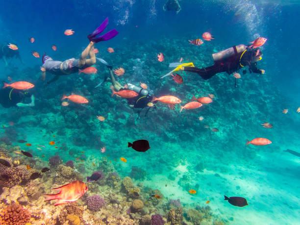 Scuba Diving explore the Red Sea