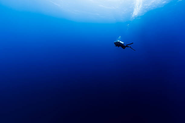 scuba diving in the wild blue yonder in french polynesia - underwater diving stock photos and pictures