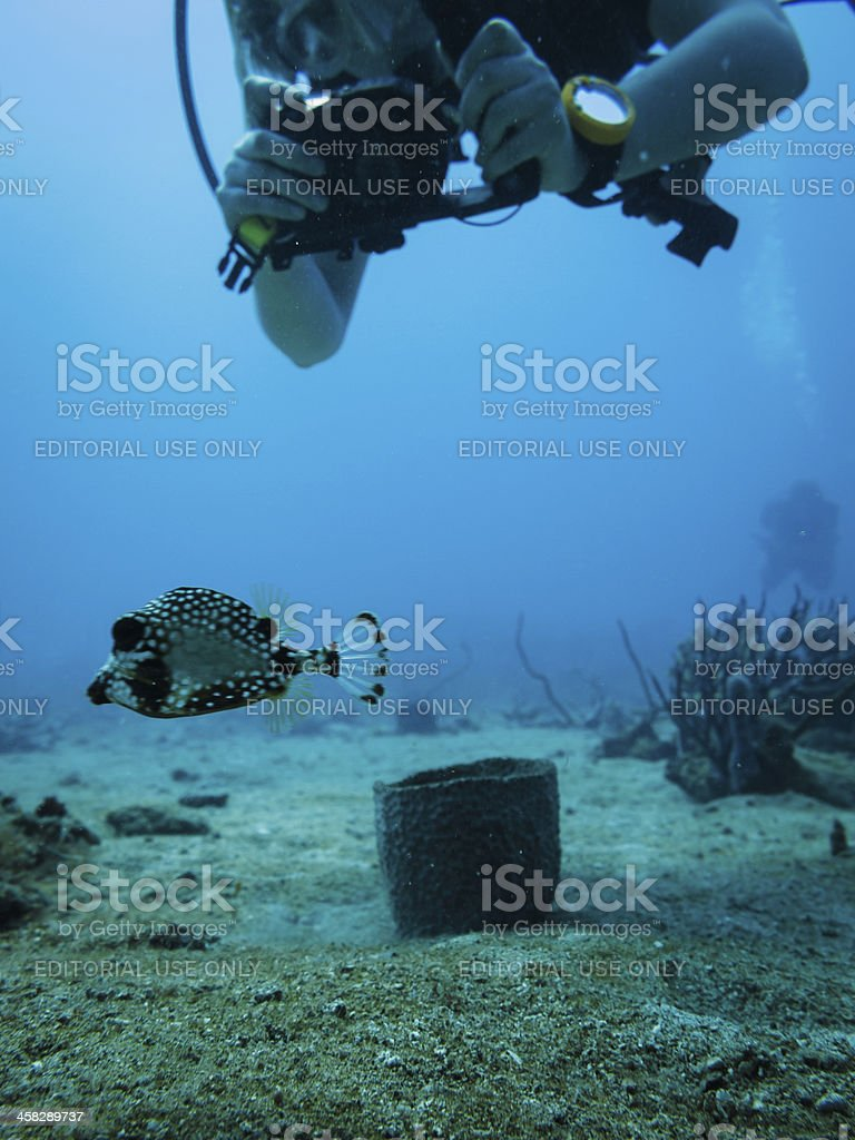 Scuba diving photographer takes picture of boxfish stock photo