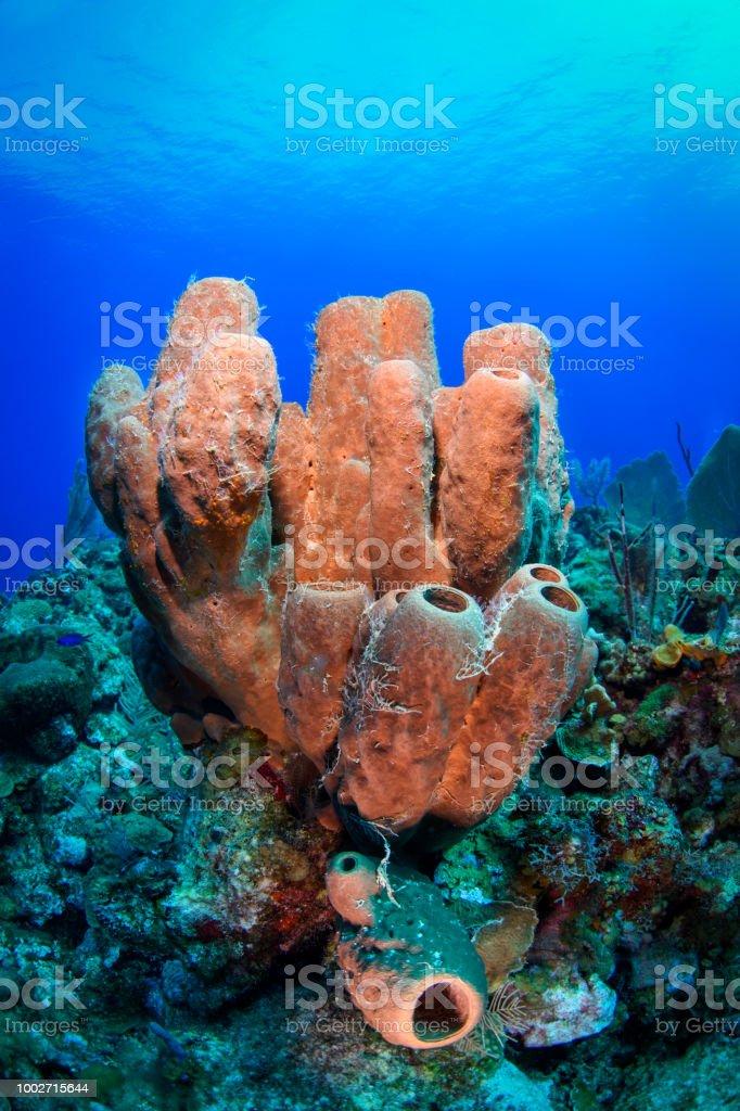 Scuba diving - Zbiór zdjęć royalty-free (Ateryna)