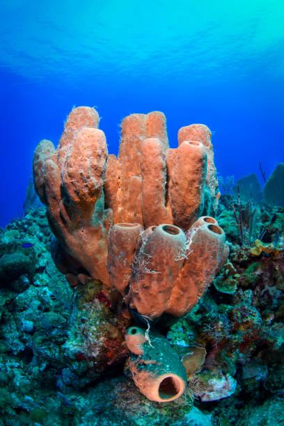 scuba diving - parzydełkowce zdjęcia i obrazy z banku zdjęć