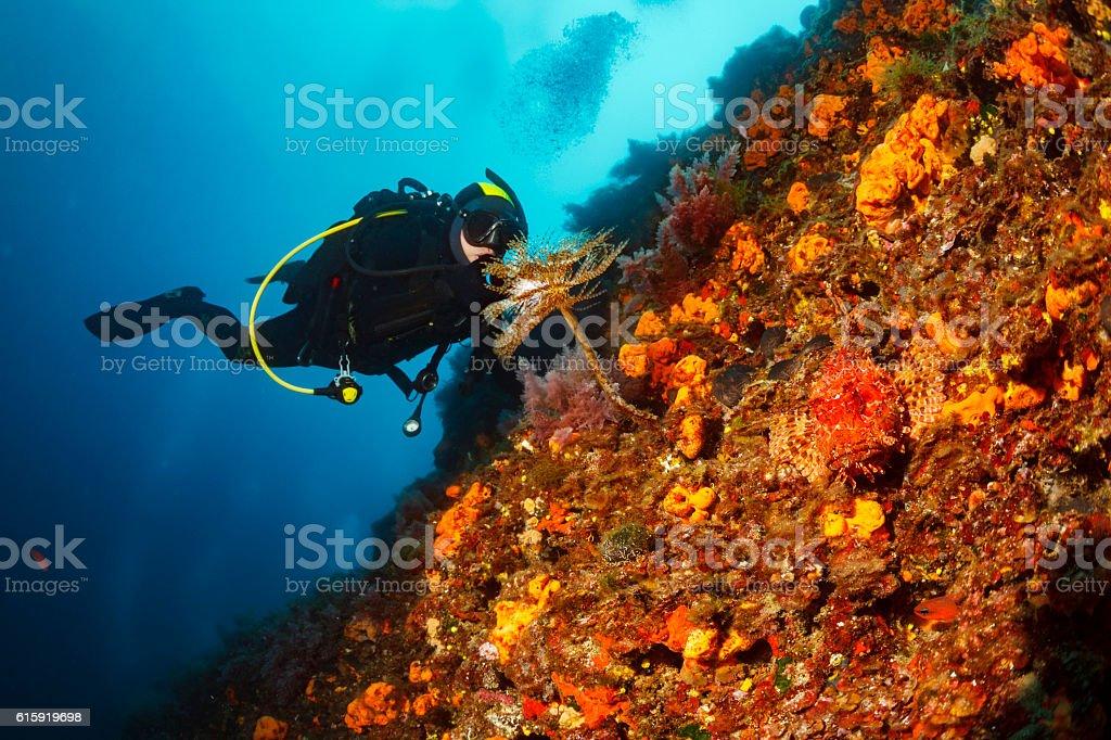 Scuba diving  Sea life  Red scorpionfish   Spral tubeworm  Orange sponge stock photo