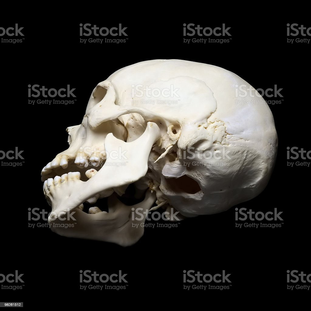 Scull royalty-free stock photo