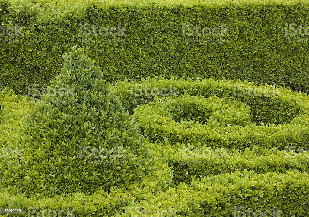 Sculpted Boxwood royalty-free stock photo