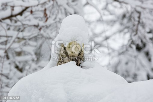 istock Sculpture of a lion covered with snow 914162758