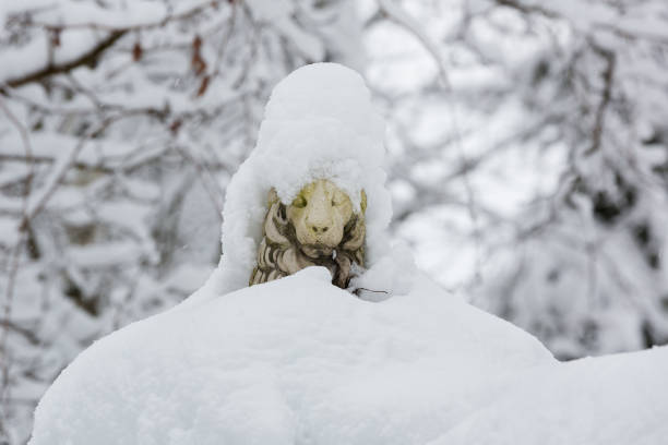 Sculpture of a lion covered with snow stock photo