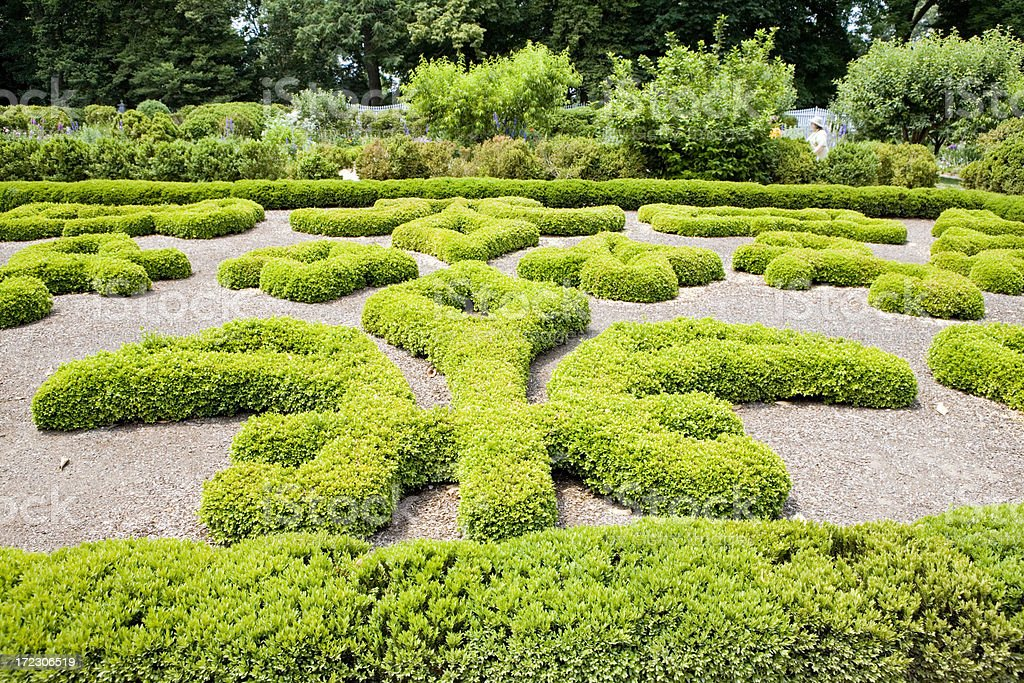 Sculpted boxwood hedges in a formal garden.