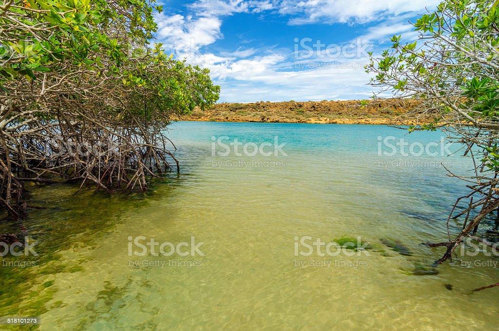 Sea and Mangrove View stock photo