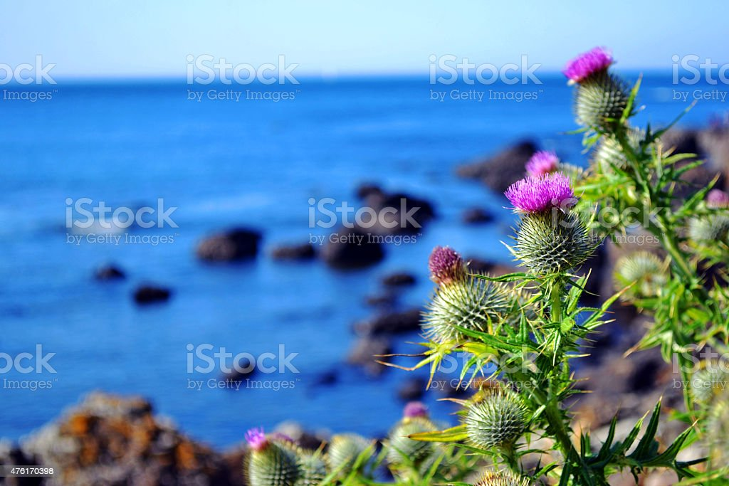 Sea and Nature stock photo