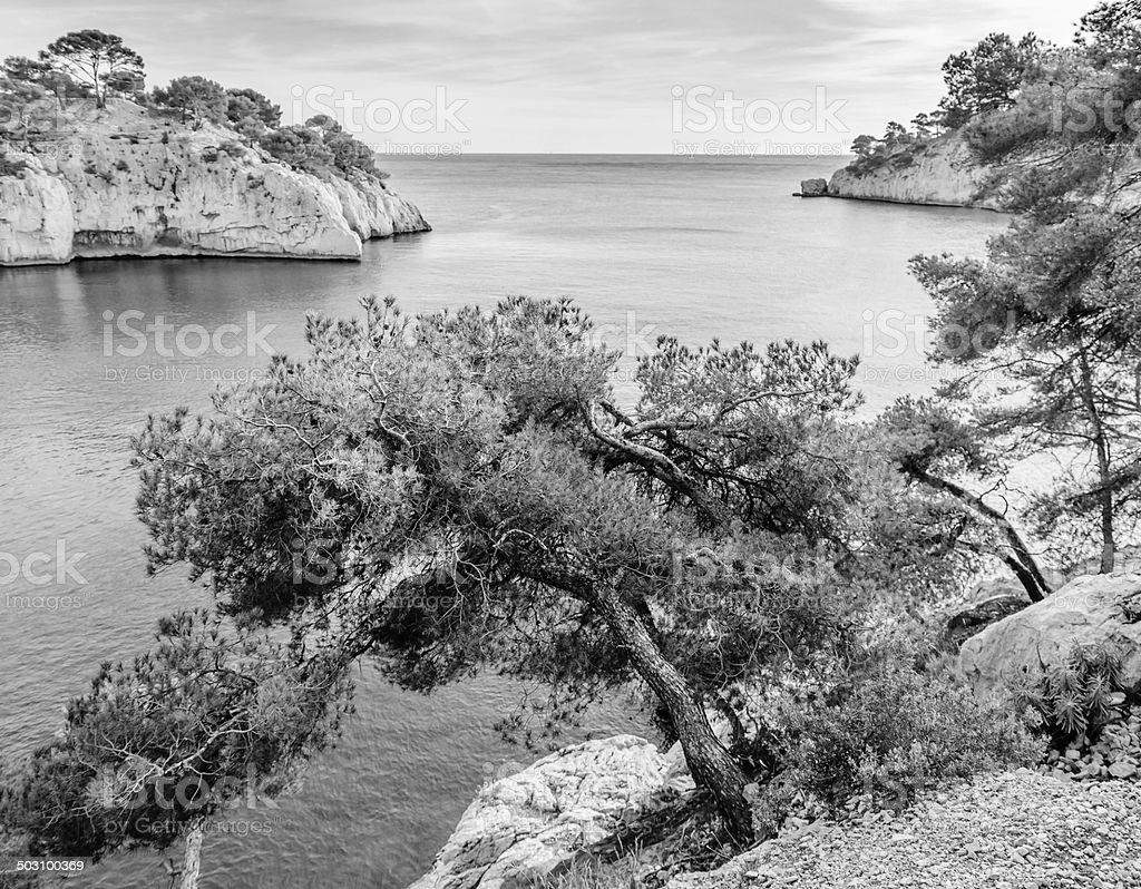 sea and pine trees in the Calanques, near Marseille