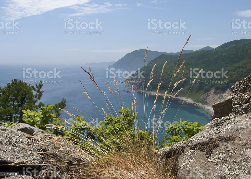 Sea and Taiga 4 royalty-free stock photo