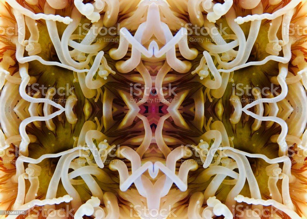 Sea anemone abstrakten Hintergrund – Foto