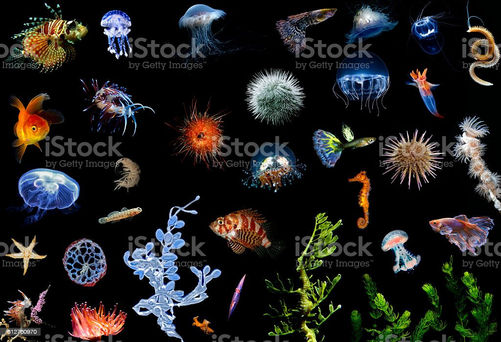 Sea Animals Collection stock photo