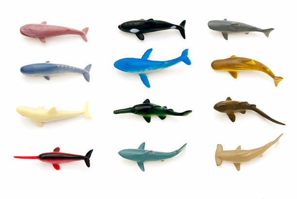 Sea animals (sharks and whales) stock photo