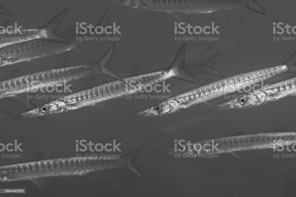 Sea arrows stock photo