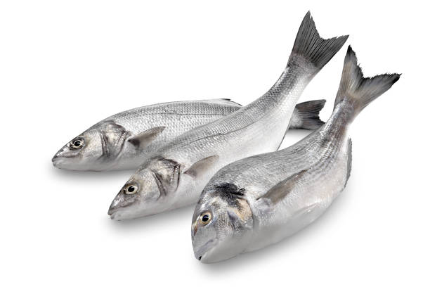 Sea Bass & Bream stock photo