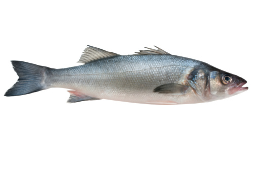 Sea Bass Stock Photo - Download Image Now - iStock