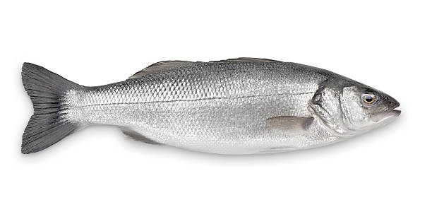 Sea bass with clipping path picture id175451217?b=1&k=6&m=175451217&s=612x612&w=0&h=dulpaje93z3qo9rat7a5naaeabyvcnmbzgdj ro5rdy=