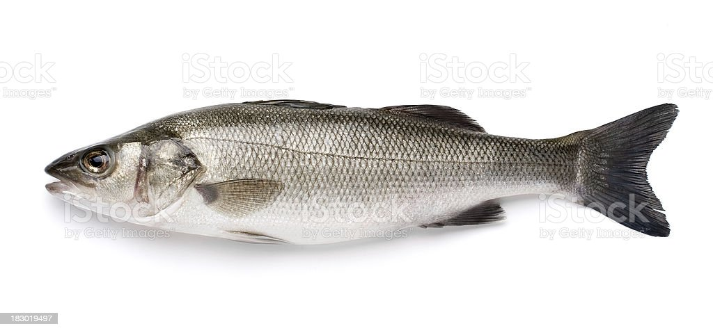 Sea Bass with Clipping Path royalty-free stock photo
