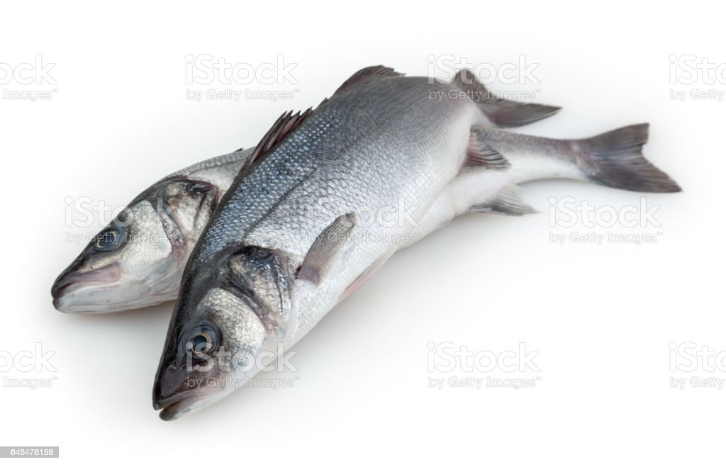 Sea basses isolated on white background with clipping path stock photo