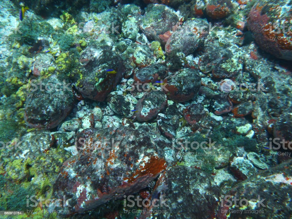Fundo Do Mar Stock Photo Download Image Now Istock