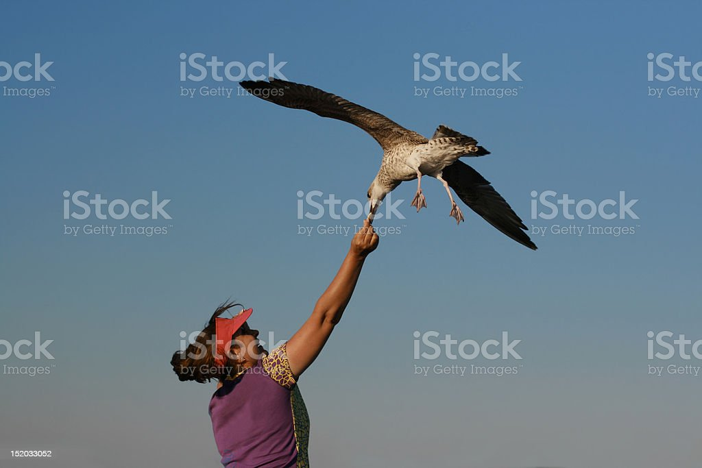 Sea bird flying with clean blue sky stock photo