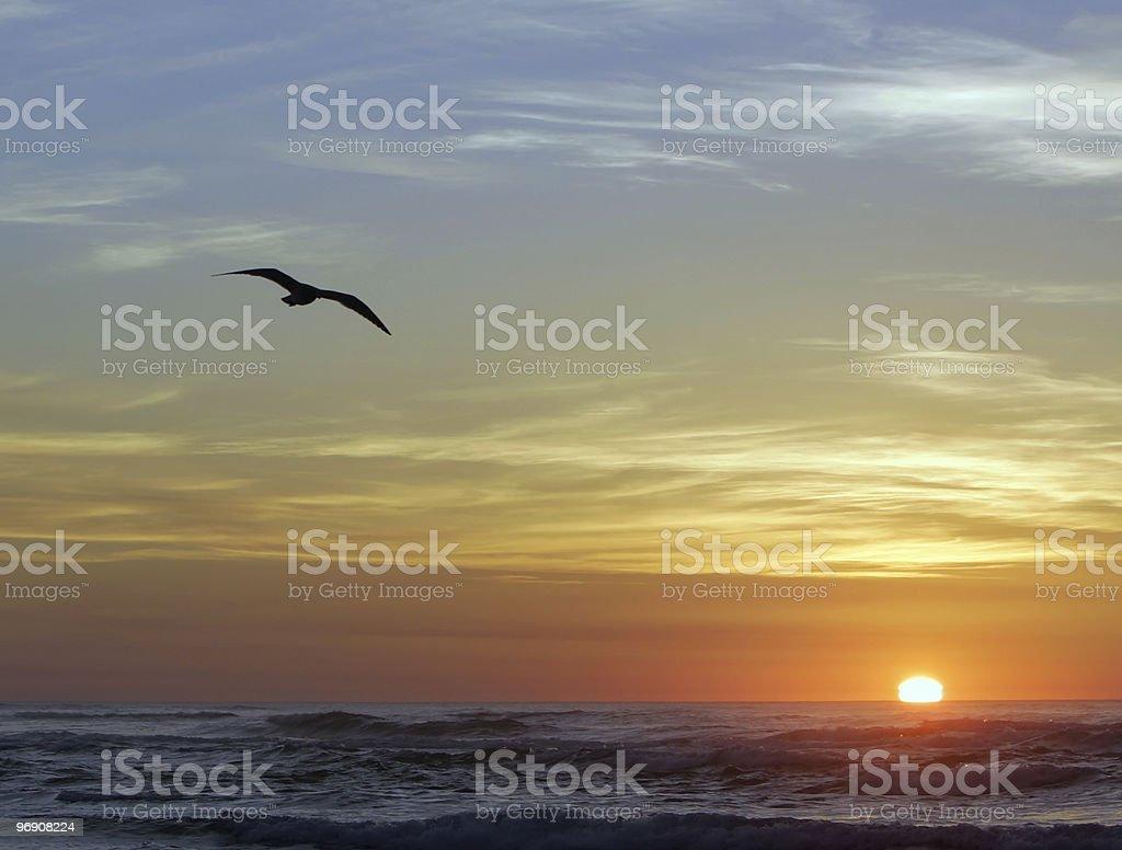Sea Bird Sunset royalty-free stock photo