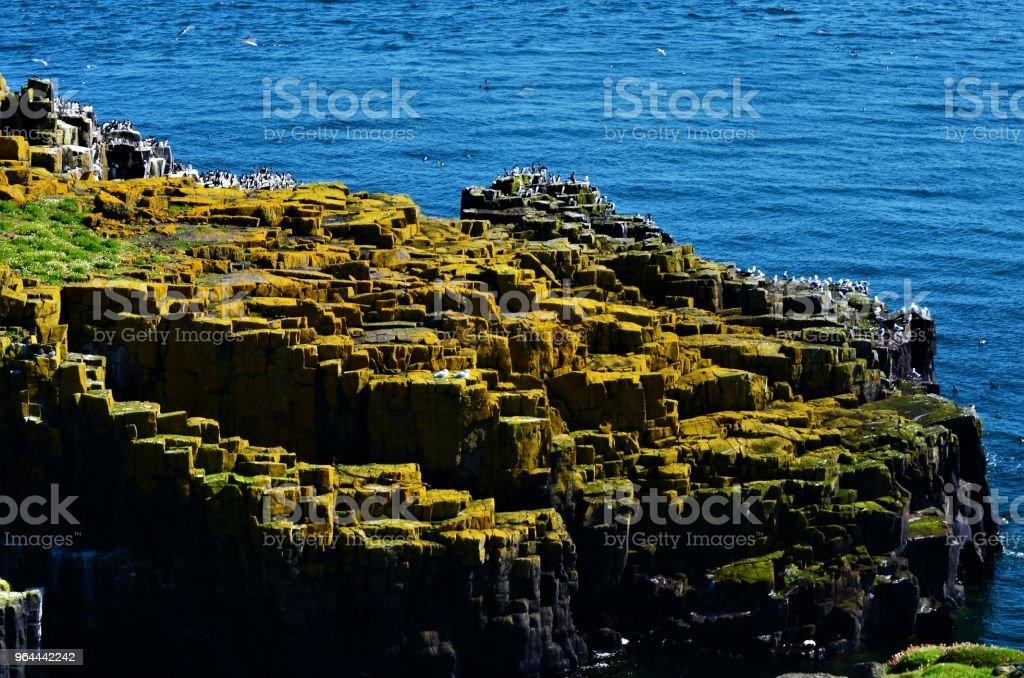 Sea Birds and Coastal Rocks - Royalty-free Animal Stock Photo