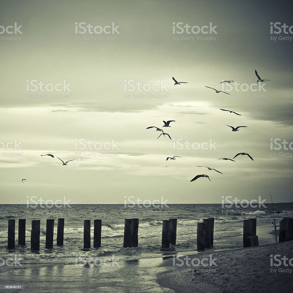 sea birds flying around a fishing spot in florida stock photo