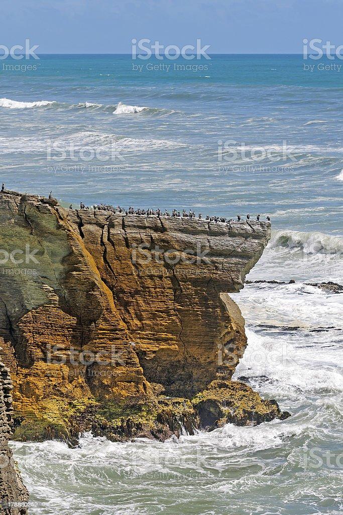 Sea Birds on a Coastal Promontory stock photo