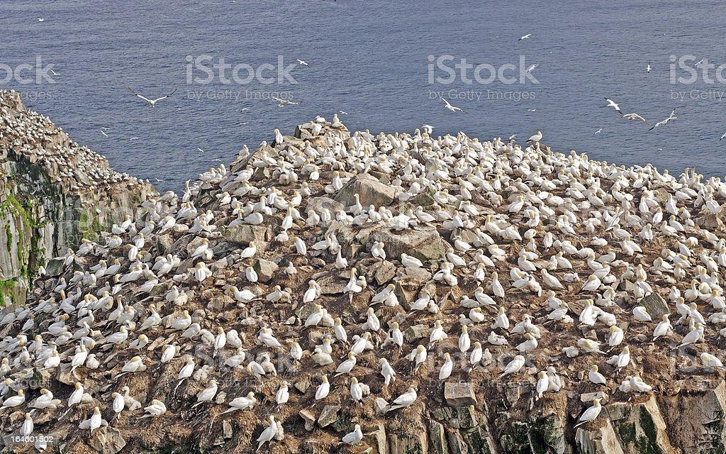 Sea Birds on a Nesting Island stock photo
