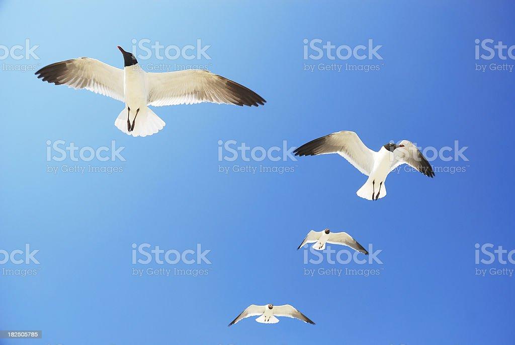 sea birds on bright blue sky royalty-free stock photo