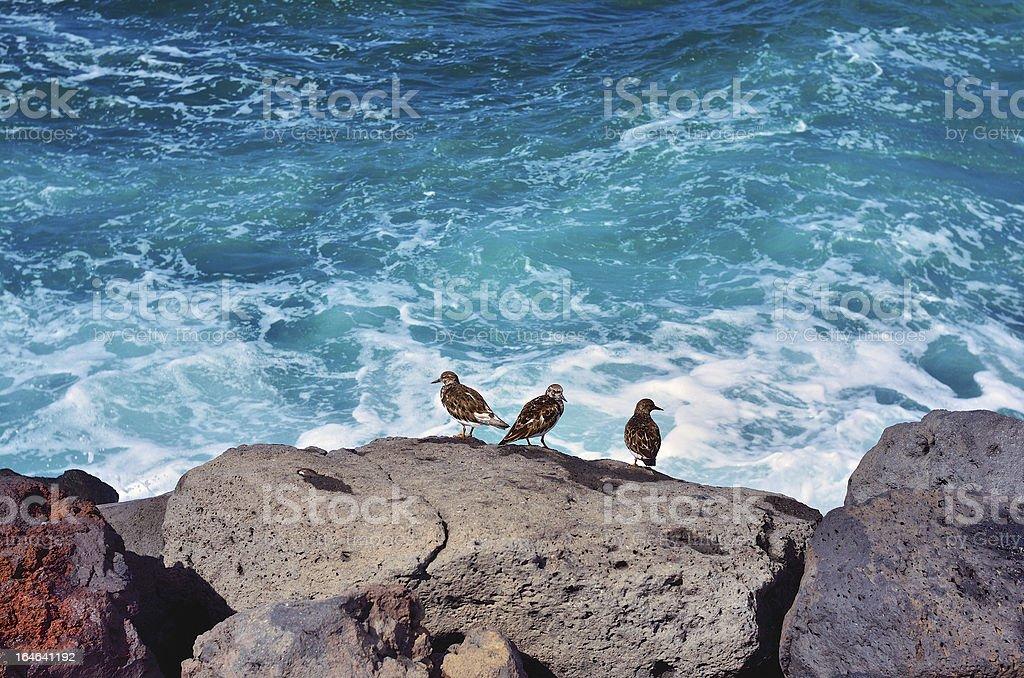 Sea Birds royalty-free stock photo