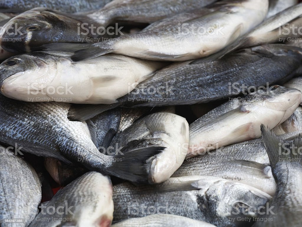 Sea Bream royalty-free stock photo