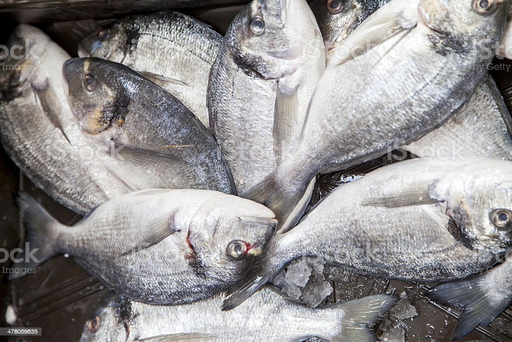 Sea breams, First class fishermans catch on market stall royalty-free stock photo