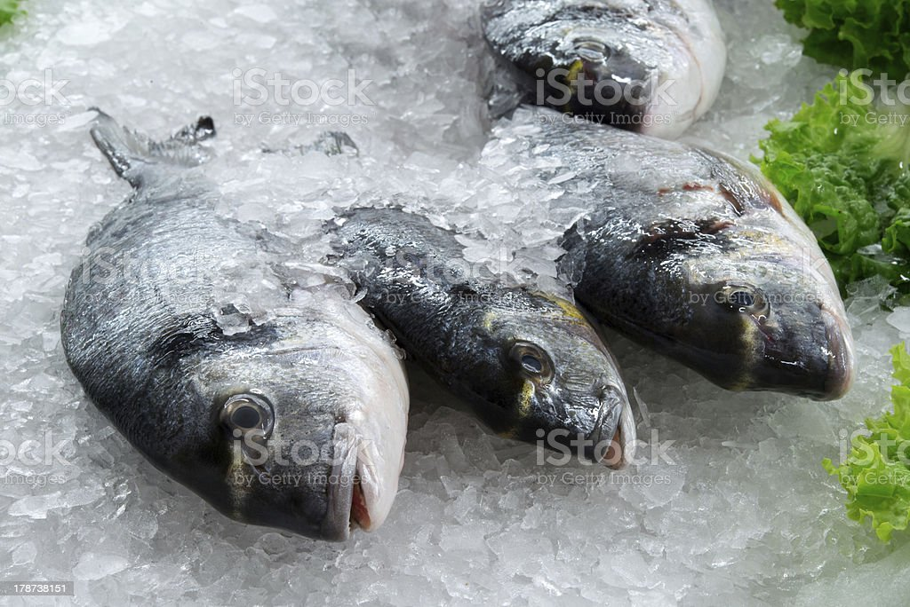 Sea breams stock photo
