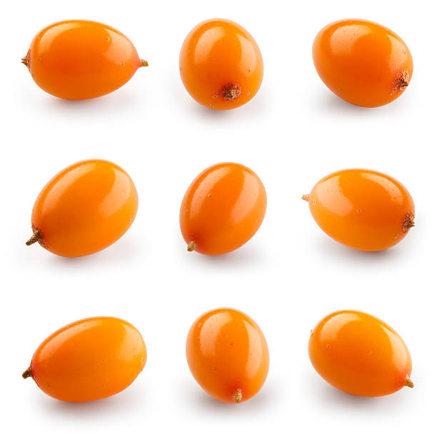 sea buckthorn isolated on the white. with clipping path. collection. - 씨벅턴 뉴스 사진 이미지