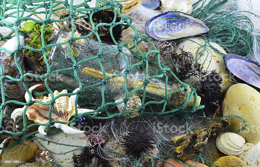 Sea catch stock photo